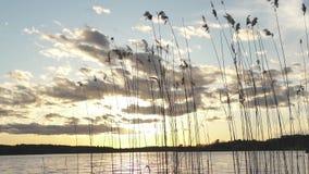 Schuifschot van silhouet van het meer het gouden riet over spectaculaire hemel tijdens zonsondergang stock footage