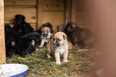 Schuilplaats voor daklozen verlaten puppy, die op een nieuwe eigenaar wachten royalty-vrije stock afbeeldingen