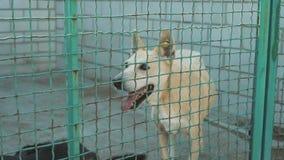 Schuilplaats voor verdwaalde honden stock videobeelden