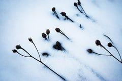 Schuin sneeuw droog gras Royalty-vrije Stock Afbeelding