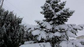 Schuine stand neer van spar wordt in zware sneeuw in de winter wordt behandeld geschoten die Langzame Motie stock videobeelden