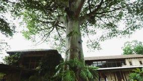 Schuine stand omhoog van een boom in het midden van ruïnes in een stadsvierkant stock videobeelden