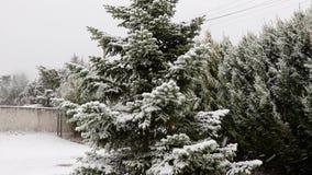 Schuine stand omhoog van spar wordt in sneeuw in de winter wordt behandeld geschoten die Langzame Motie stock footage