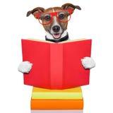 Schul-learing Hund Stockfoto