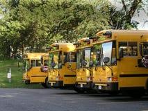 Schulbusse ausgerichtet Stockbild