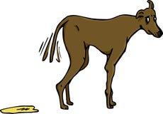 Schuldige Hundeverwirrung Stockfotos