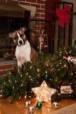 Schuldiger Hund Stockfotos
