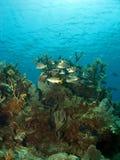 Schule der Fische auf einem korallenroten Kopf Lizenzfreies Stockbild
