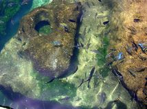 Schule der tropischen Fische Stockfoto