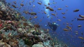 Schule von bunten Fischen auf Riff im Ozean und im Taucher stock footage