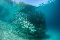 Schule von Fischen 2 Stockfotografie