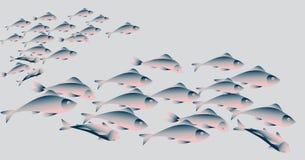Schule von Heringfischen auf weißem Hintergrund Lizenzfreie Stockfotografie