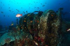 Schule von Meer-goldie Fischen über dem Wracknamen ist SS Thistlegorm stockbild