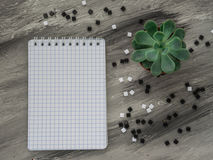 Schulnotizbuch mit Blume auf grauer Tabelle Zurück zu Schule Lizenzfreies Stockbild
