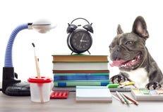 Schulsatz und französische Bulldogge Stockbild