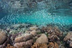 Schulung von Riff-Fischen Stockfotografie