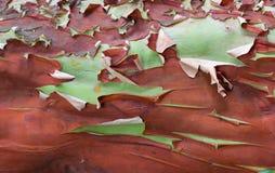 Schuppungsbarke eines Baums lizenzfreies stockfoto