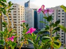 Schuss des schönen Morgens die Stadt Entspannungsansicht vom Balkon mit Blumen stockbilder