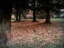 Schuss eines Rotes lässt Boden unter den Bäumen stockbilder