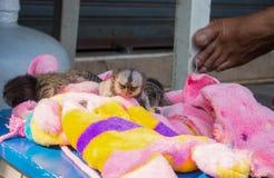 Schutz der wild lebenden Tiere Lizenzfreies Stockbild
