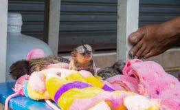 Schutz der wild lebenden Tiere Stockbilder