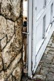 Schutz Dog Lizenzfreie Stockfotos