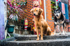 Schutz Dogs Lizenzfreie Stockbilder