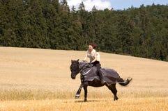 Schutz gegen Insekten für Pferde. Stockbilder