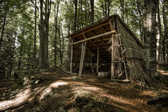 Schutz im Holz Stockfotografie