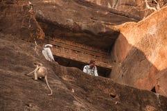Schutz und ein Affe in Ajanta Stockfoto