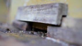 Schutzbienen, die den Eingang zum Bienenstock schützen stock video footage