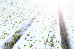 Schutze von Autos auf Schnee und von gefallenen grünen Blättern mit sonnigem Krisenherd Lizenzfreie Stockbilder