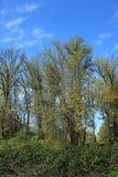 Schutzgebiet-Staat Washington Ridgefield nationaler Stockfotos