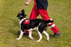 Schutzhund Lizenzfreie Stockfotos