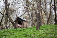 Schutzhund, der in der Hundehütte im Garten schläft Lizenzfreie Stockbilder