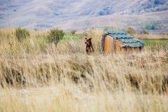 Schutzhund mit Hundehütte Stockfotos