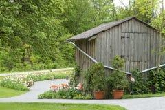 Schuur en bloeiende tulpen stock foto's