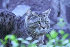 Schuwe kat in Belgrado Stock Afbeelding