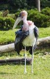 Schuwe vogel Royalty-vrije Stock Foto's