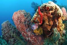 Schwämme auf Korallenriff Lizenzfreie Stockbilder