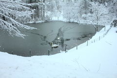 Schwäne auf schneebedecktem See Stockfotos