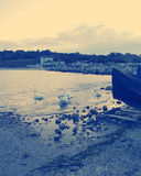 Schwäne bei Schwarzem Meer, Rumänien stockfoto