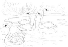 Schwäne, die im See schwimmen lizenzfreie abbildung
