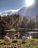 Schwäne durch See im Park Lizenzfreie Stockfotografie