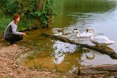 Schwäne kamen auf Ufer, die Schwäne auf dem See mit einer Brücke Lizenzfreie Stockbilder