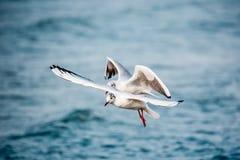 Schwäne und andere Wasservögel auf dem Meer Stockfotografie