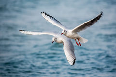 Schwäne und andere Wasservögel auf dem Meer stockfoto
