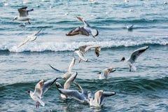 Schwäne und andere Wasservögel auf dem Meer Lizenzfreie Stockfotos