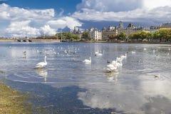 Schwäne und Enten auf dem Seestudenten in Kopenhagen Stockbild