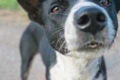 Schwärzen Sie gemustertes HundewarteLebensmittel vom Chef Stockfotos